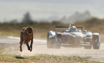 cheetah_leading_car_at_start.jpg