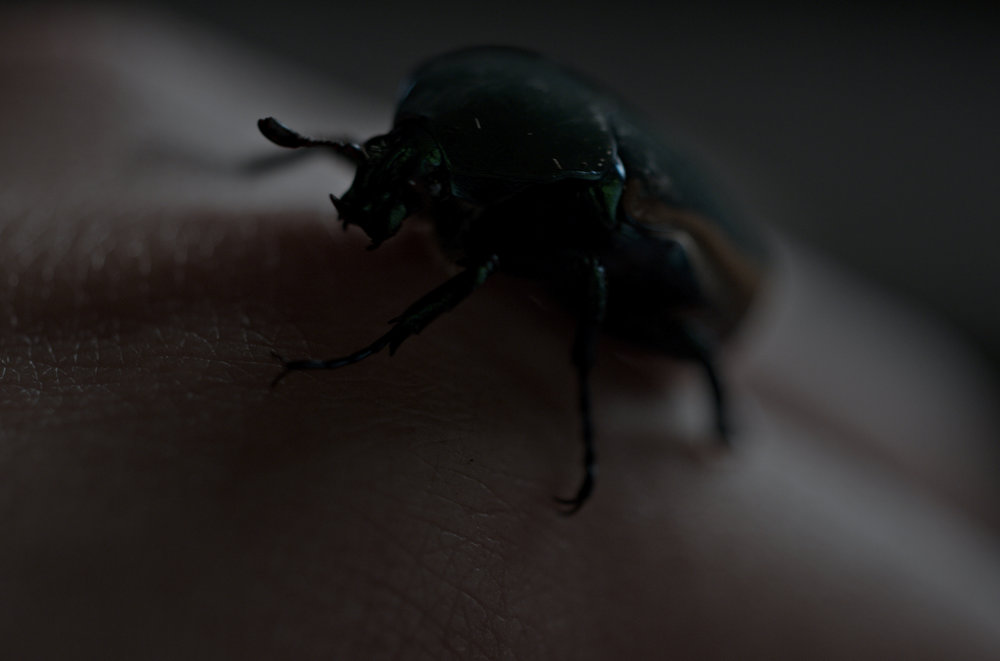 5_Beetle.jpg