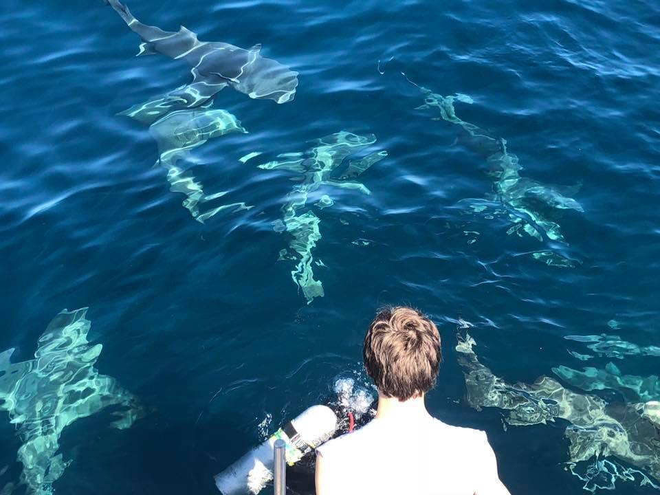 pp shark 4.jpg