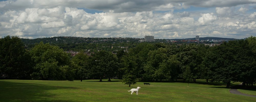 Enjoying the view in Meersbrook Park with Lottie | Blasted, Sheffield
