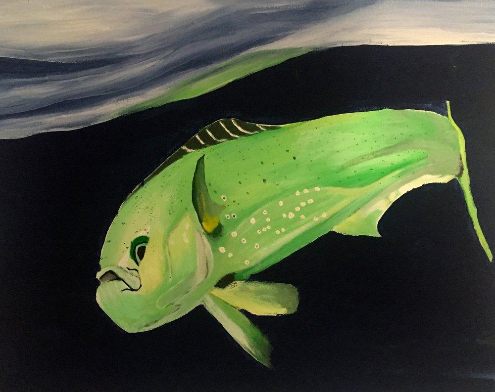 Mahi Mahi ( Coryphaena hippurus ) Owen O'Shea Acrylic on Canvas