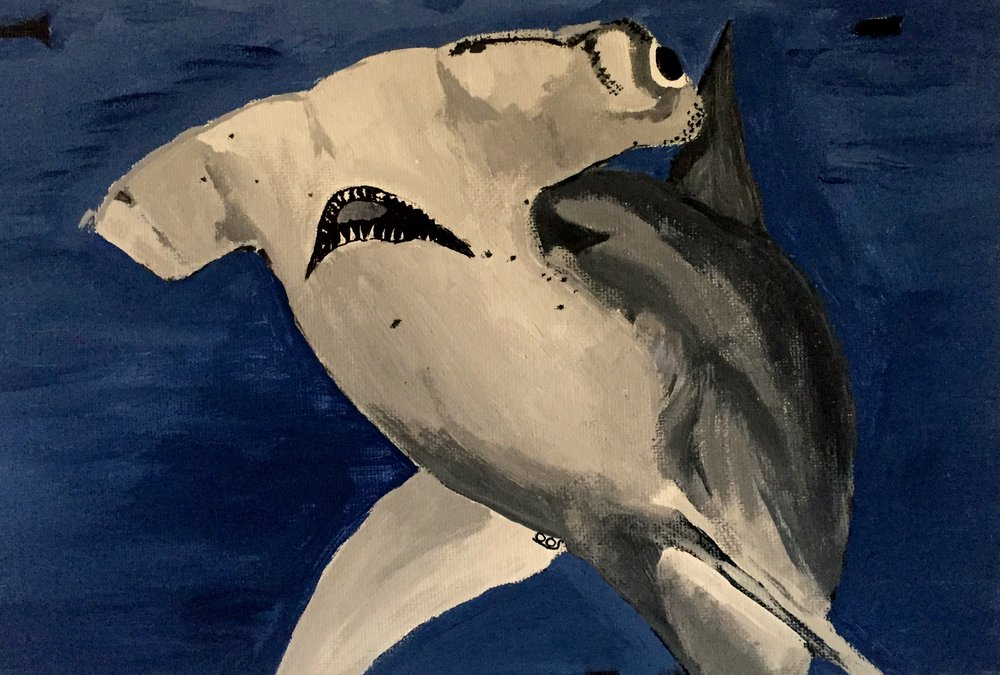 Scalloped Hammerhead ( Sphyrna lewini ) Owen O'Shea Acrylic on Canvas