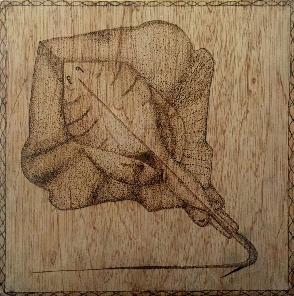 Skate ( Raja  sp.) Cianan Gamble Wood Burn