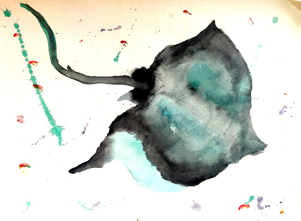 Stingray (Dasyatidae) Owen O'Shea Watercolour