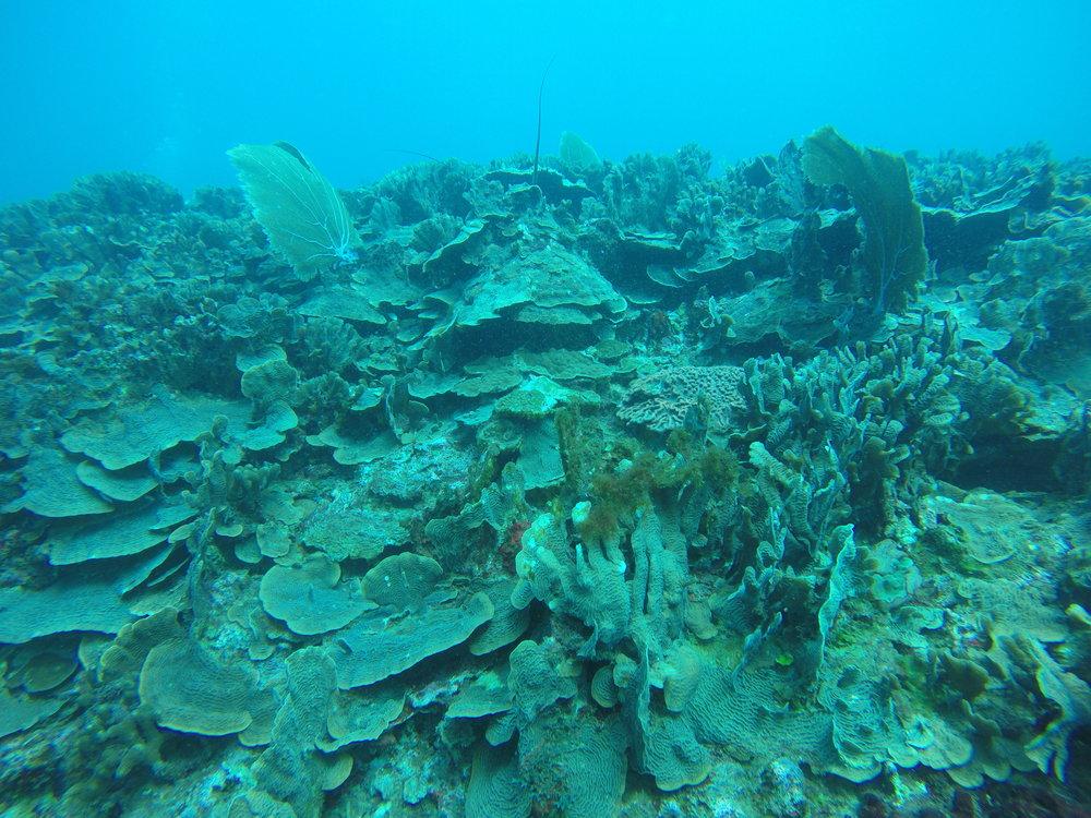 Tela coastal reefs