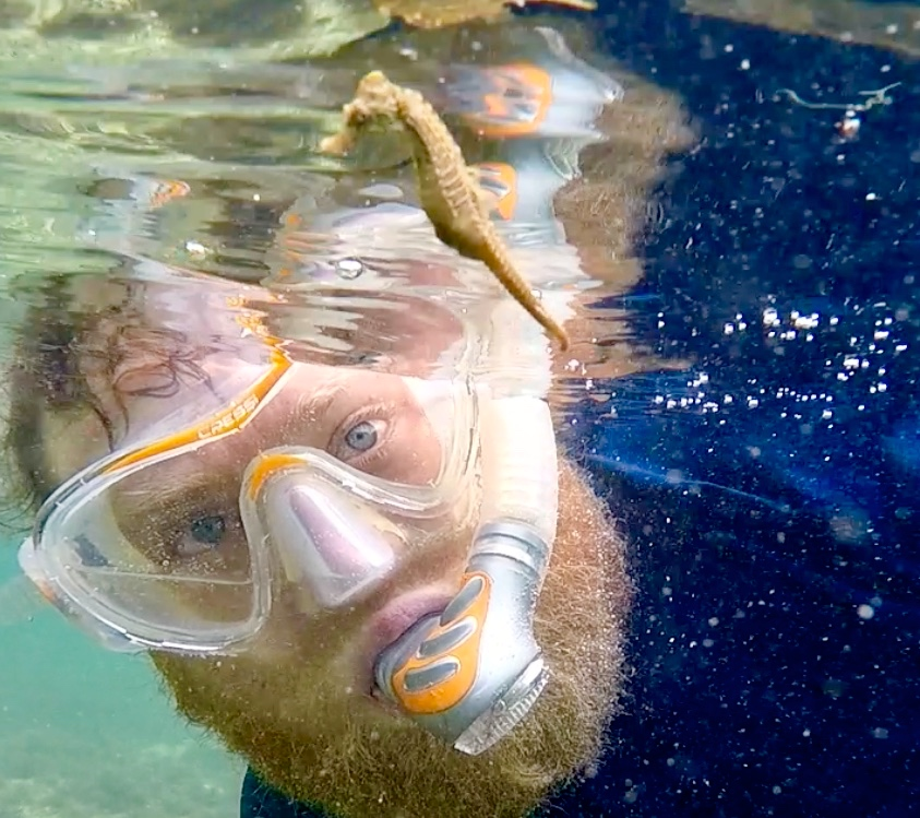 Dr. O'Shea examines a lined seahorse