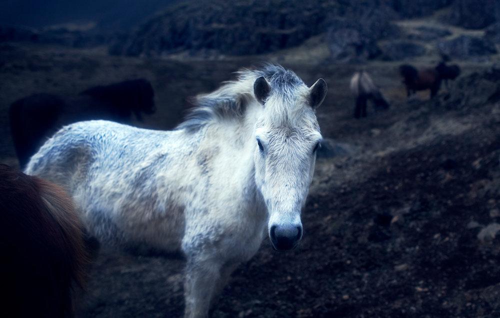 218807-11227218-06154ICE0506_MYTHICAL_HORSE_SKEI_AR_RSANDUR_REDO_jpg.jpg