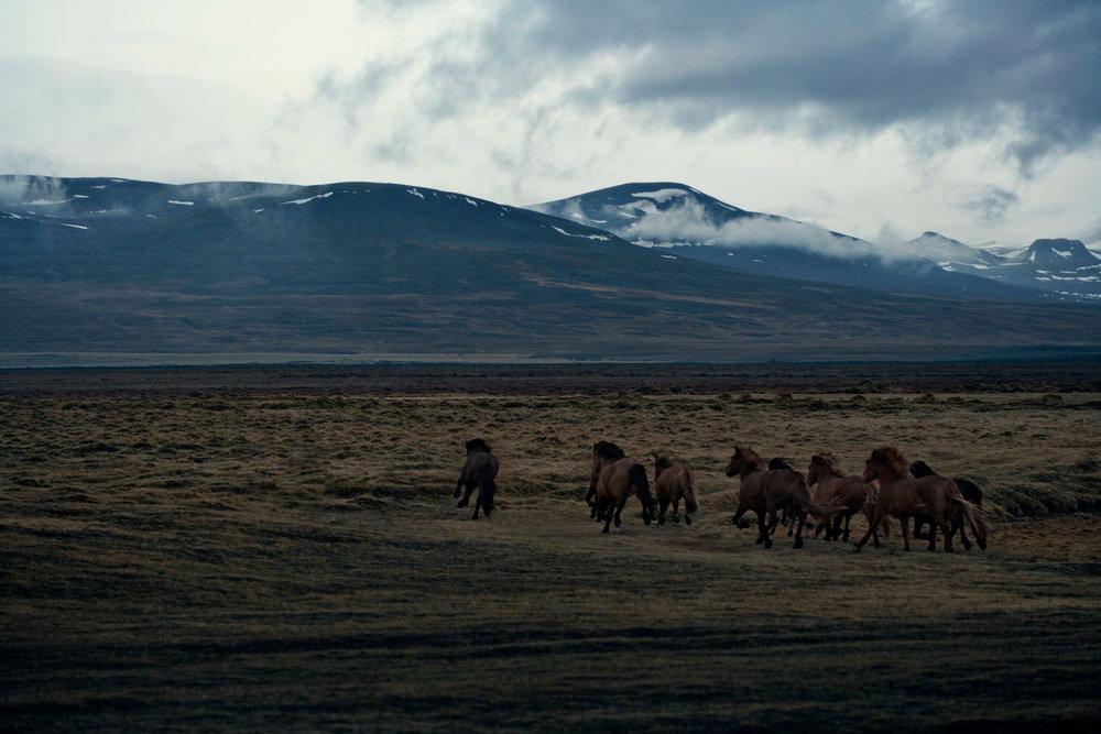 218807-11227733-Iceland_Day06-01-001789_jpg.jpg