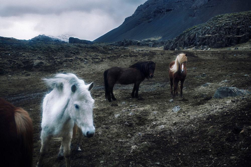 218807-11227732-Iceland_Day04-02-001044_jpg.jpg