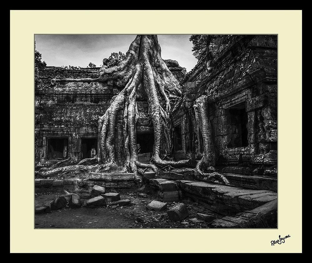 AngkorFig - AS804369-5.jpg