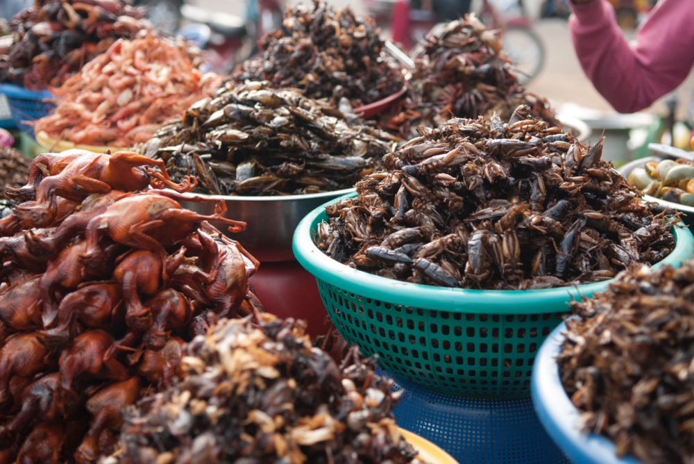 Deep fried critters on sale in Phnom Penh