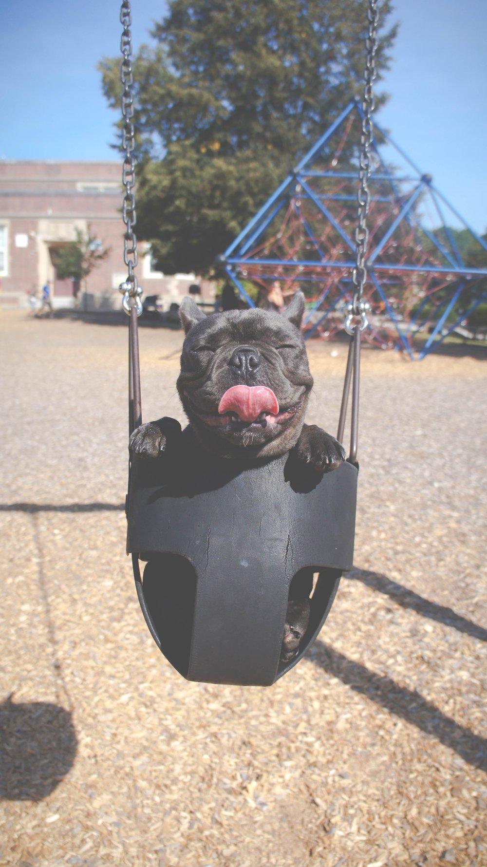 Happiest-Dog.jpg