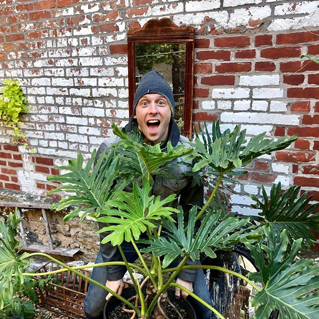 My Philodendron exploded this year in the garden!! When he's happy...I'm happy. 🌿❤️⠀ #theplantman #greenleo #bloomwhereyoureplanted ⠀