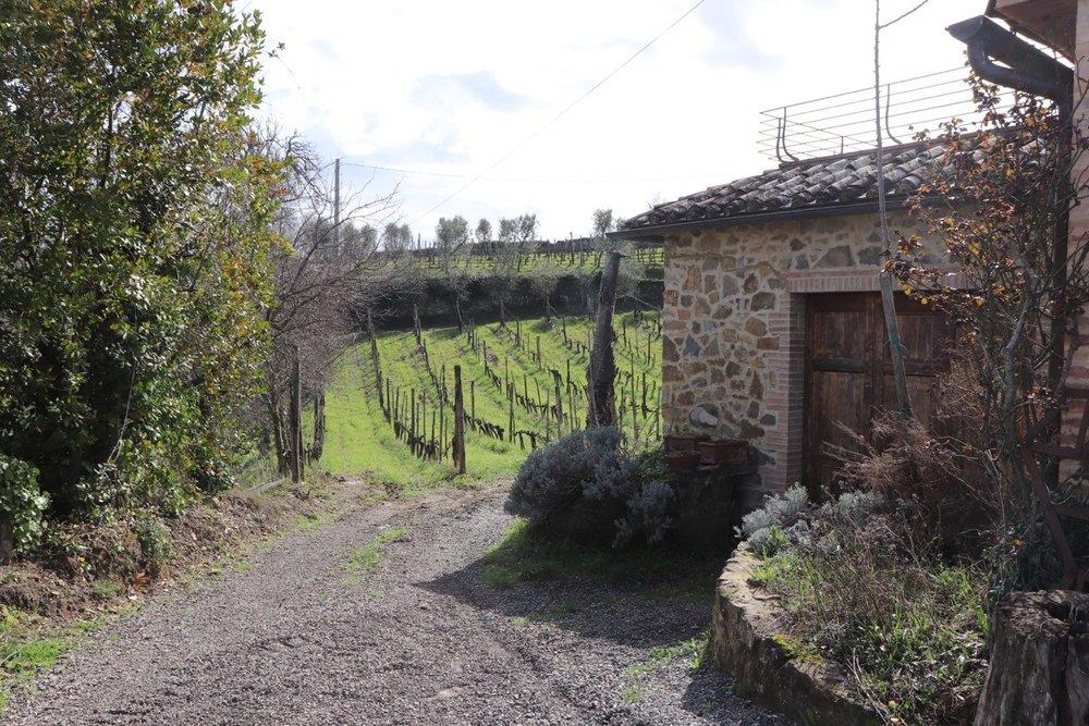 manfredi_vineyard