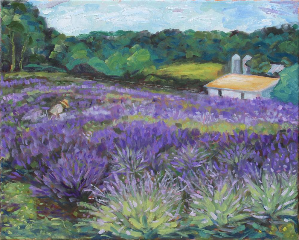 Rufo's Lavender
