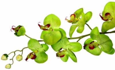 orchid-e1413592763833.jpg