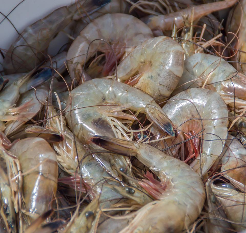 2:45 PM - 3:45 PM - Shrimp: From Net to Table to Economic Powerhouse