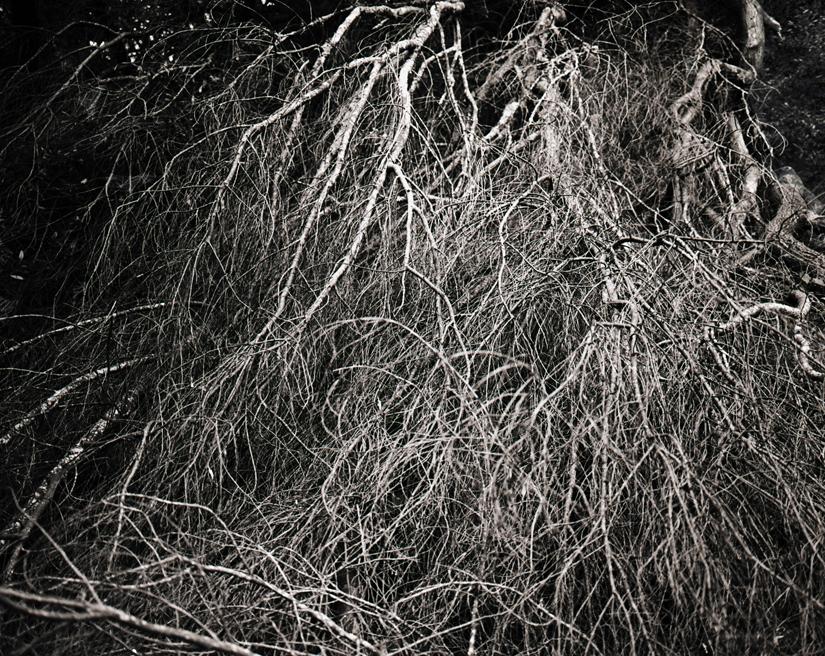 w baldi branches
