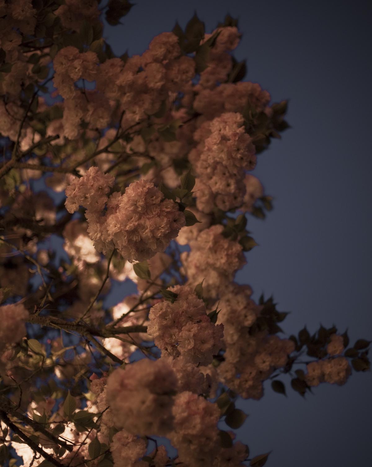 spring blossoms-1