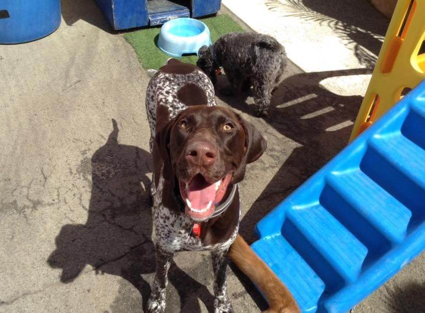 Barks in the Park - dog-friendly events Perth.jpg