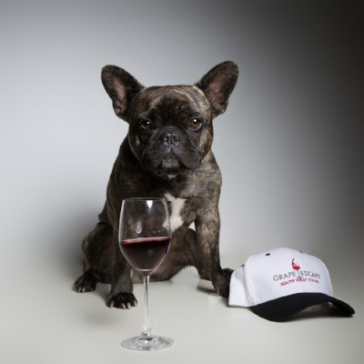 Gizmo, chief wine taster at Grape Escape Tours