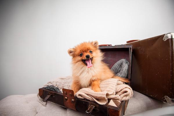 Dog-friendly hotels.jpg