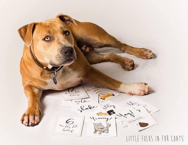 Pet milestone cards Australia.jpg