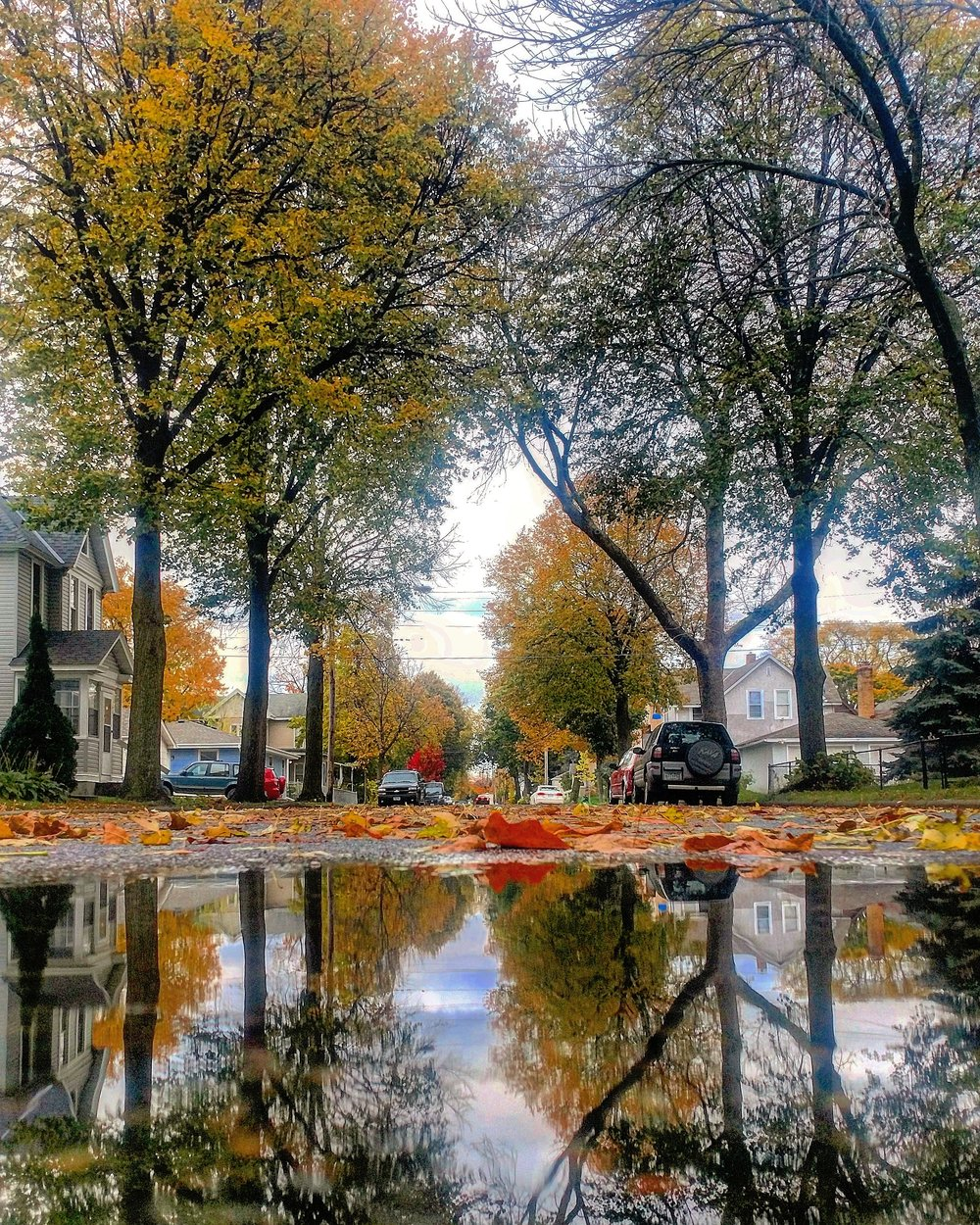 Fall Color Puddlegram.