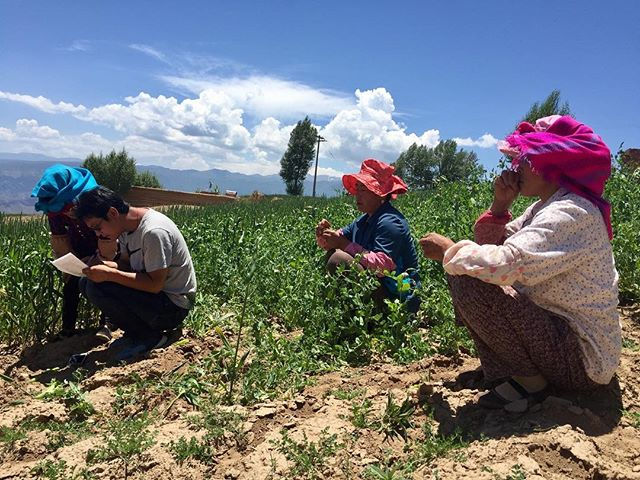 More outdoor interviews #agriculture #women #villagepeopleproject #beautiful #tibetanvillages #china #qinghai
