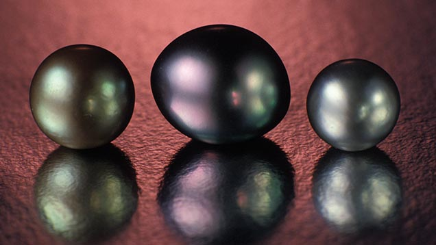 These natural pearls from French Polynesia have a dark gray to black bodycolor. The middle pearl shows pink and green orient, while the overtone of the pearl on the left is mostly green.