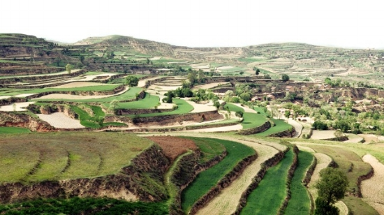Constructed-terrace-for-agriculture-on-the-Loess-Plateau-639.jpg