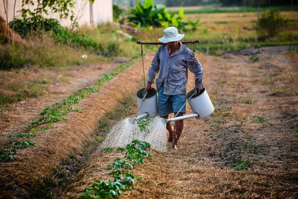 Farmer in Vietnam watering every plant manually.