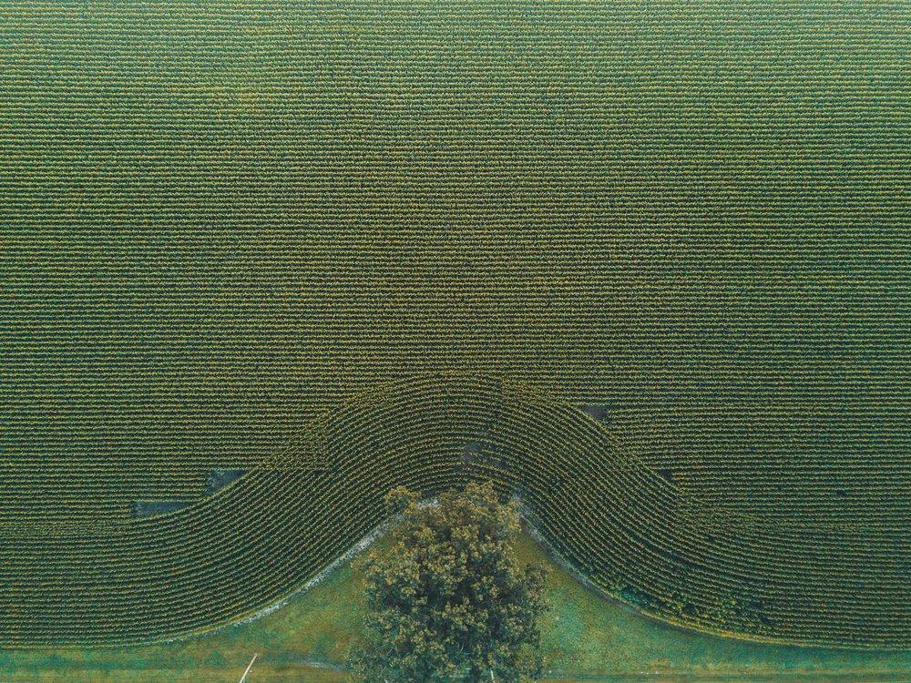 Drone Stills_0018.jpg