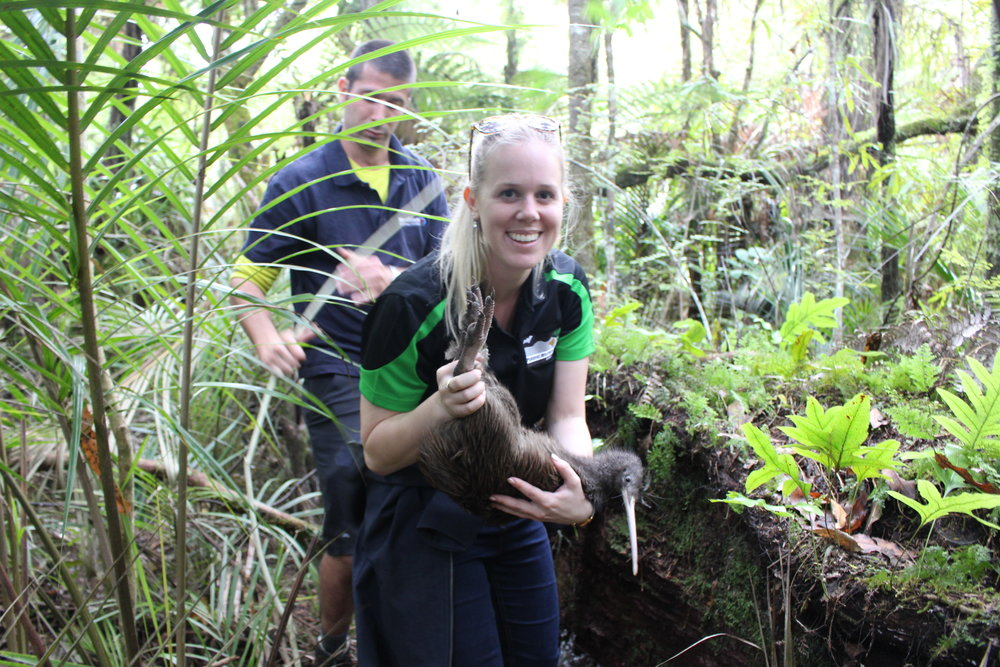 Brooke with kiwi, Talha, named after one of the youngest victims in the March 2019 Christchurch mosque shooting. Brooke is a proud trustee on the Pukenui/Western Hills Forest Charitable Trust, and 12 kiwi were released into the forest on 6 April 2019.