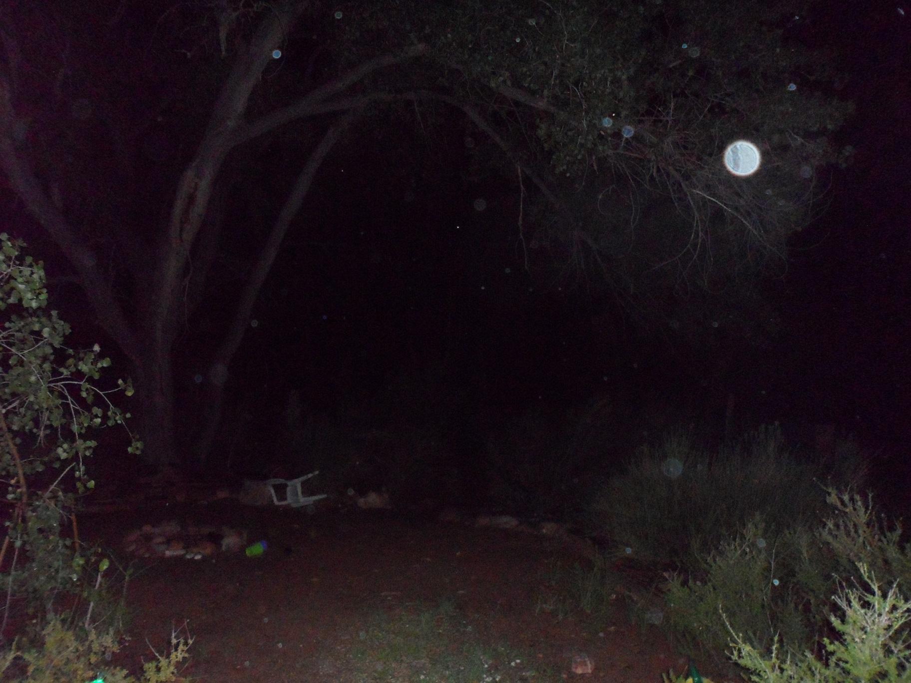 orbs backyard