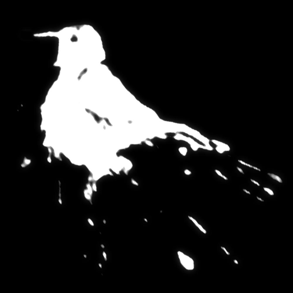 holy-bird-shit.jpg