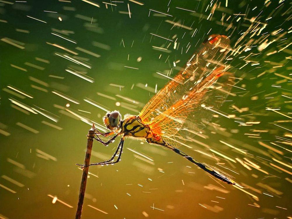 dragonfly-hd-rain.jpg