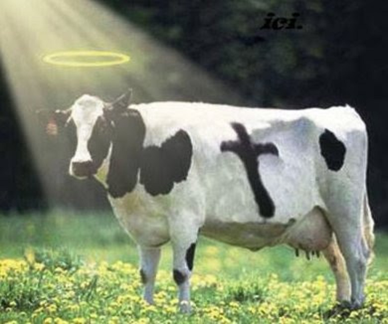 holy-cow