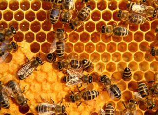 beehive-honeycomb-beeswax-propolis