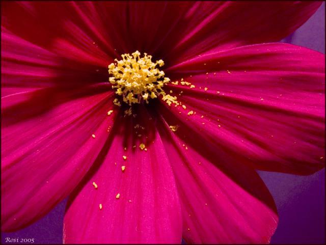 pollen_flower.sized