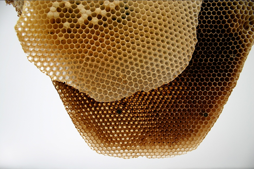 large_honeycombCloseup