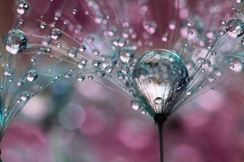 drops-of-love
