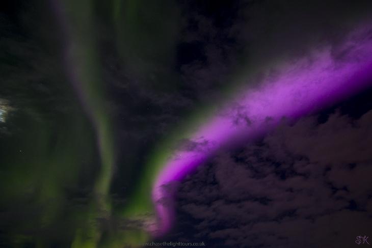 pink-auroras