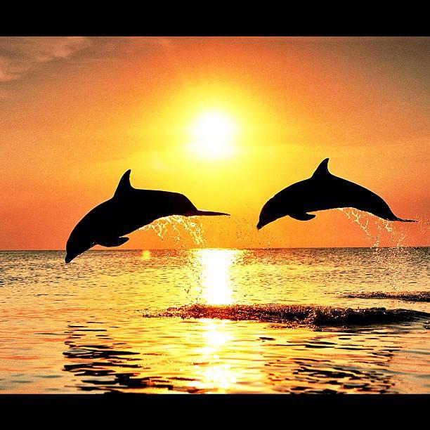 swim free