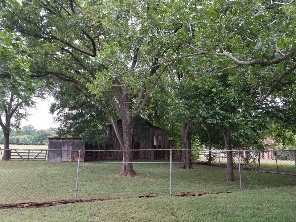 backyard3