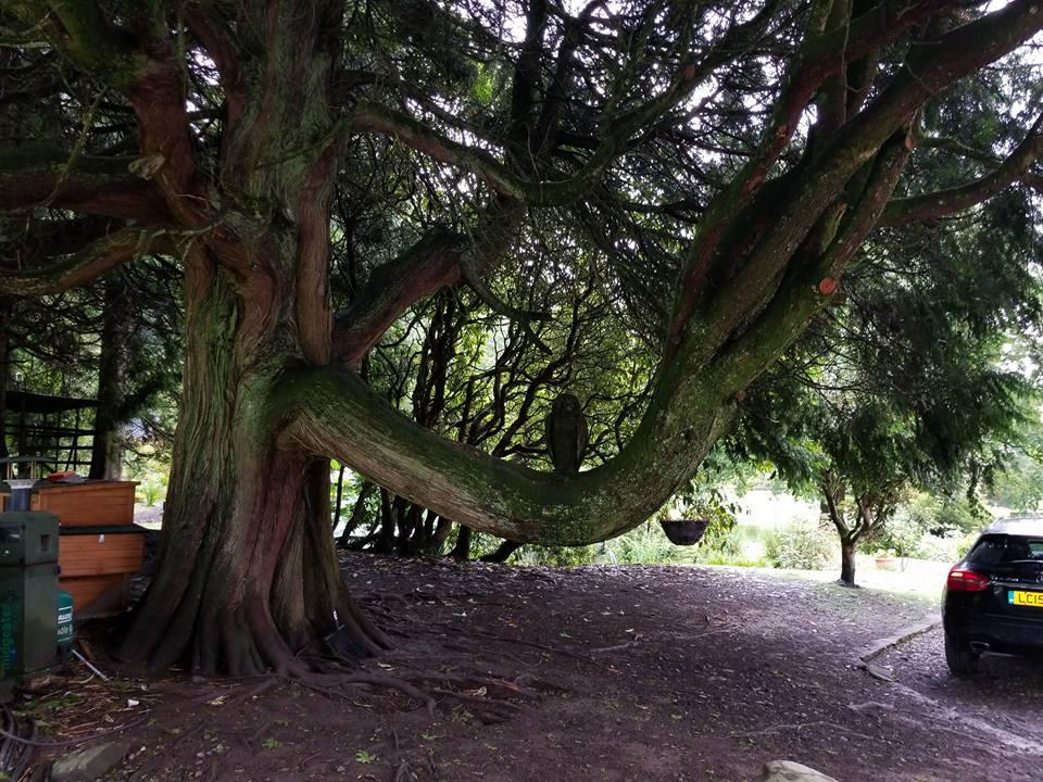 kirnan house tree scotland.jpg