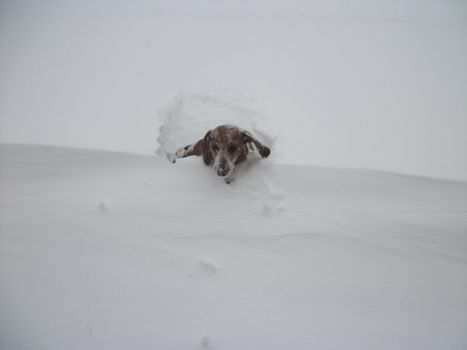 trapped_in_the_snowbank_by_shadenightfox.jpg