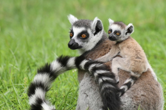 June 25-28 from 9:00 am - 12:00 pm  Animal Adaptations  Grades K-2   Registration