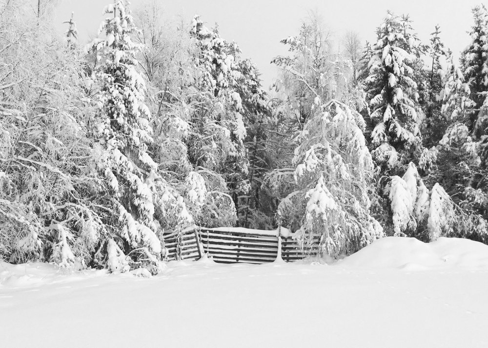 Snow covered fences in North Sweden_Photo_Johan Kauppi.jpg