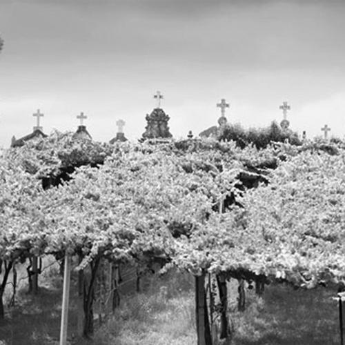 RUTA DEL VINO RÍAS BAIXAS   Os Lambráns está situada en la ruta del vino Rías Baixas que os llevará al descubrimiento de sabores extraordinarios. Descubre las singularidades de las áreas de O Rosal, Condado do Tea, Soutomaior, Val do Salnés y Ribeira do Ulla, que se extienden desde la frontera con Portugal en la provincia de Pontevedra hasta el sur de la de A Coruña.